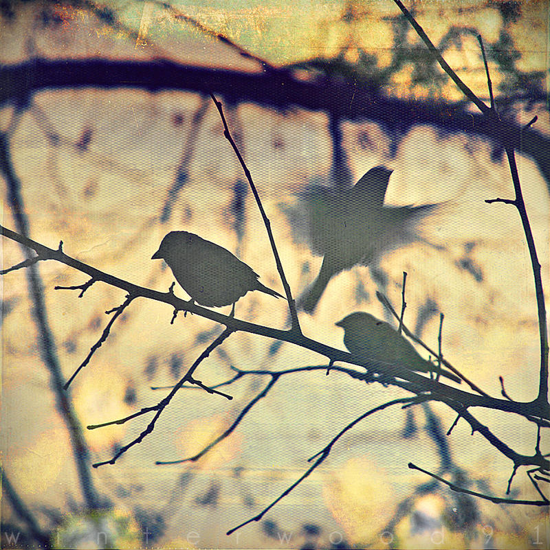 I dreamed I was flying... by WinterWood91