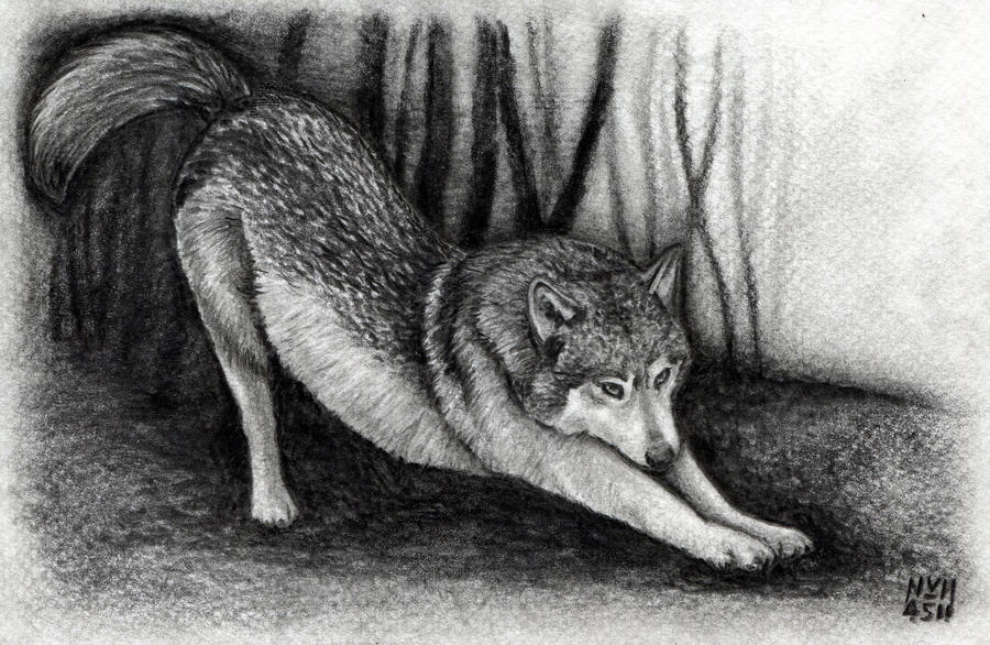 How to Draw a Wolf by finalprodigy on DeviantArt