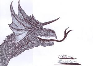 Cabeza de dragon 2008