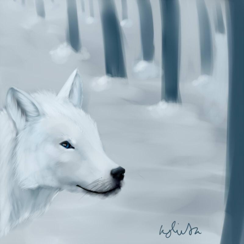 white wolf snow trees
