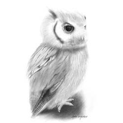 Charcoal Pencil - Owl   Dibujo