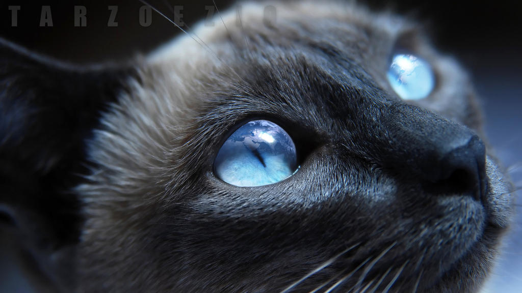 Cat in Space by TarzoEzio