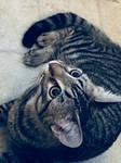 My Pet Kitten (3)
