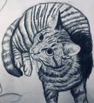 A Sketch of My Pet Kitten