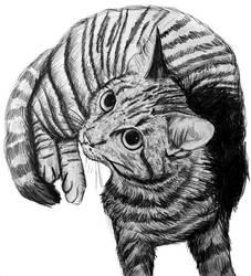 Sketching My Pet Kitten
