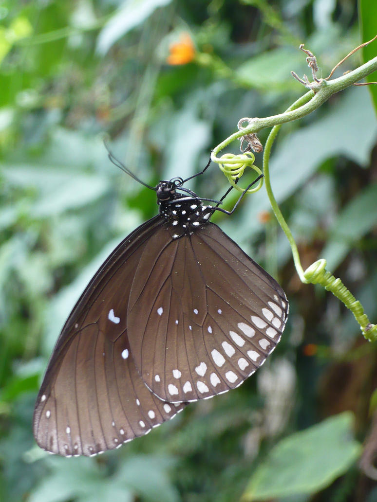 Butterfly by Vempje