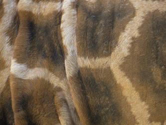 Beautiful coat by Vempje