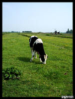 Dutch Cow by neurolepsia