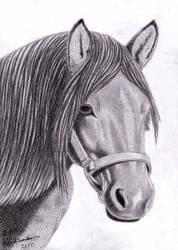 Horse portrait by Elkenar