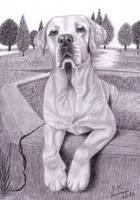 Labrador Romel by Elkenar