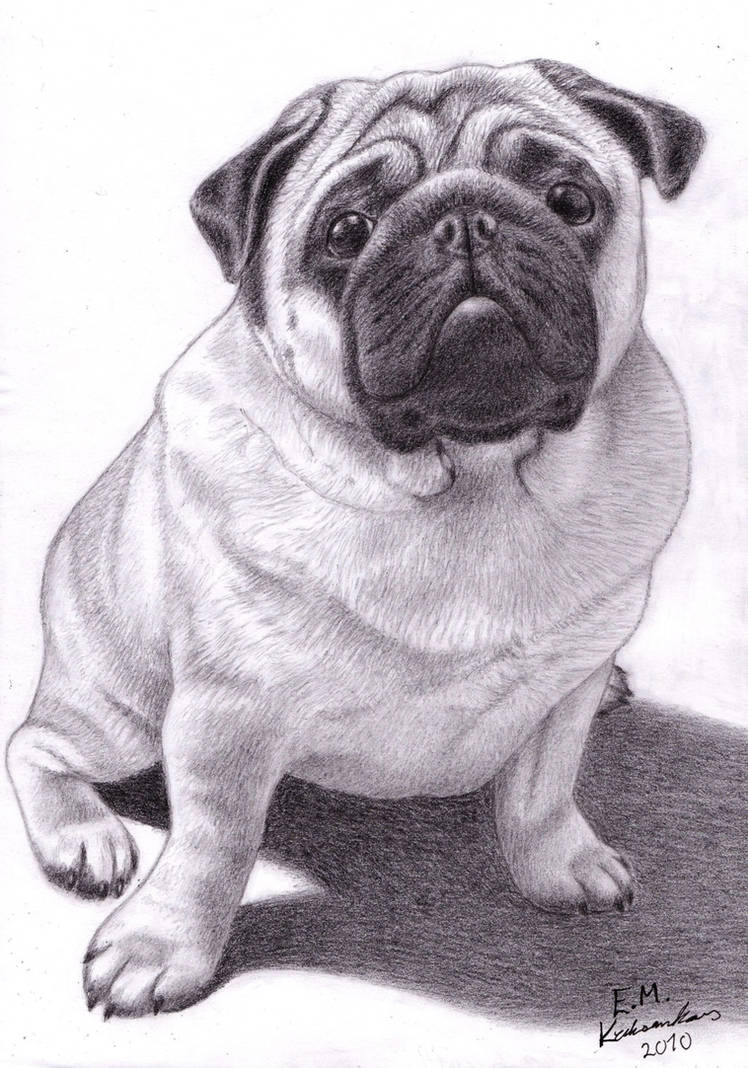 Brucey the Pug