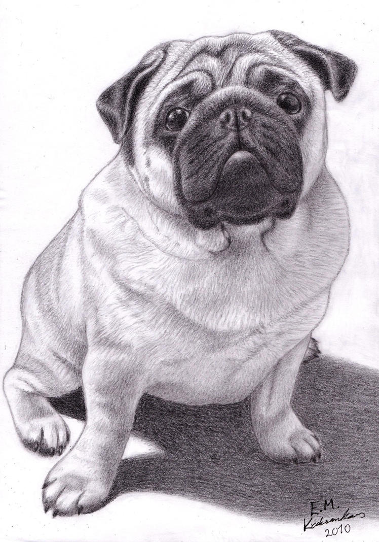 Brucey the Pug by Elkenar