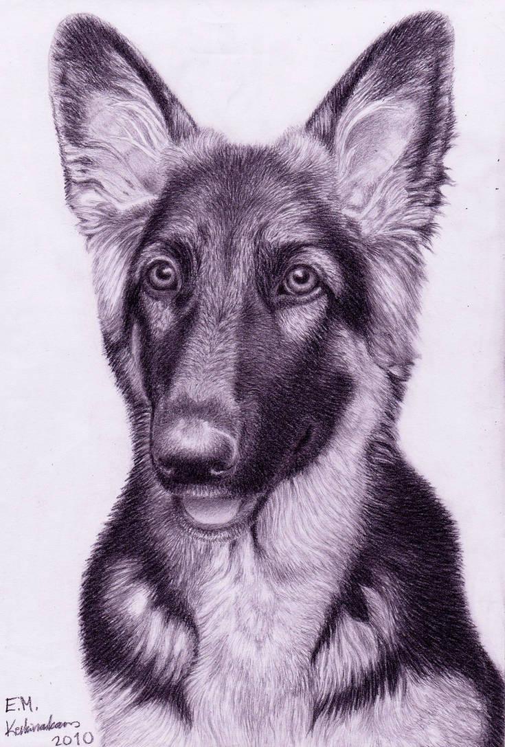 Abbey the German Shepherd pup