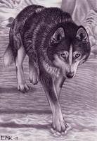 Alaskan husky - Shy step by Elkenar