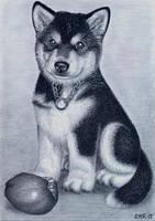 Alaskan Malamute pup and her prey by Elkenar