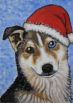 Husky card 2011