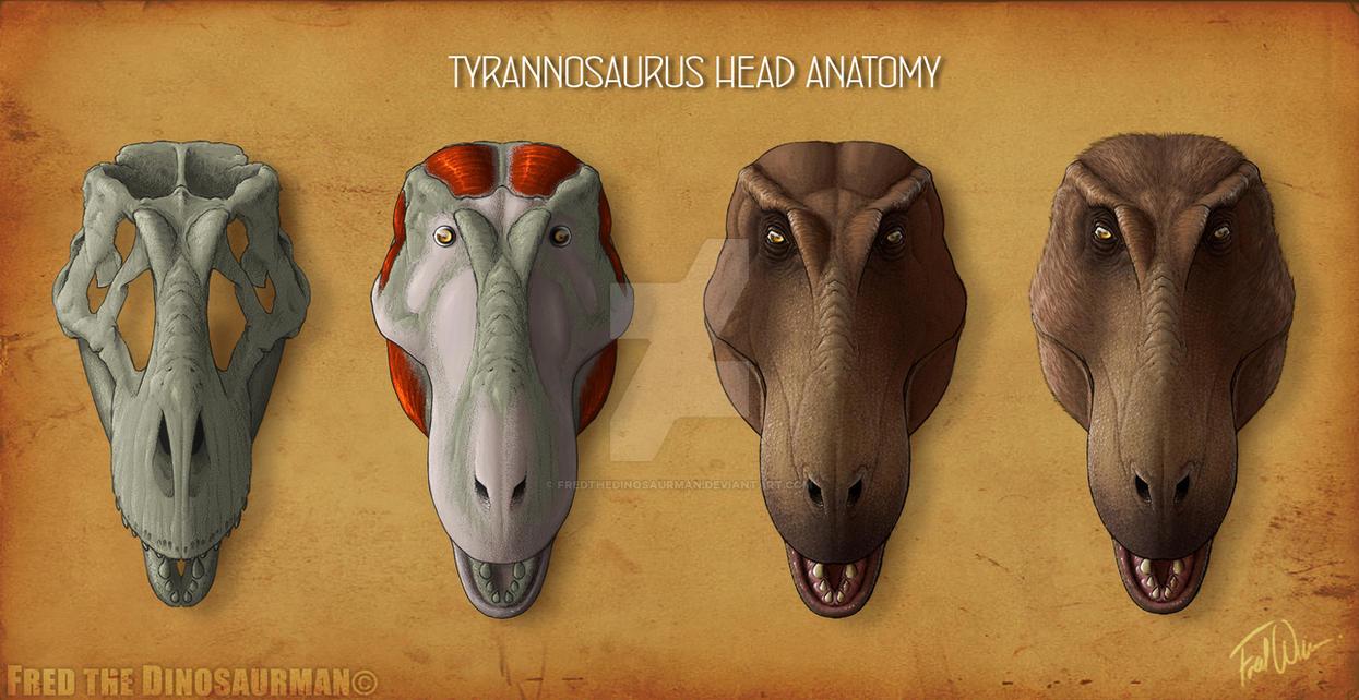 Tyrannosaurus Rex Head Anatomy by FredtheDinosaurman on DeviantArt