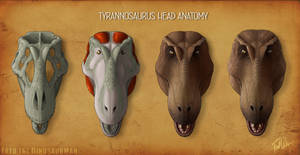Tyrannosaurus Rex Head Anatomy