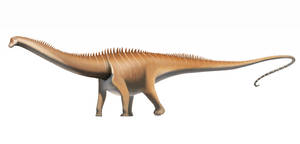 Diplodocus by FredtheDinosaurman