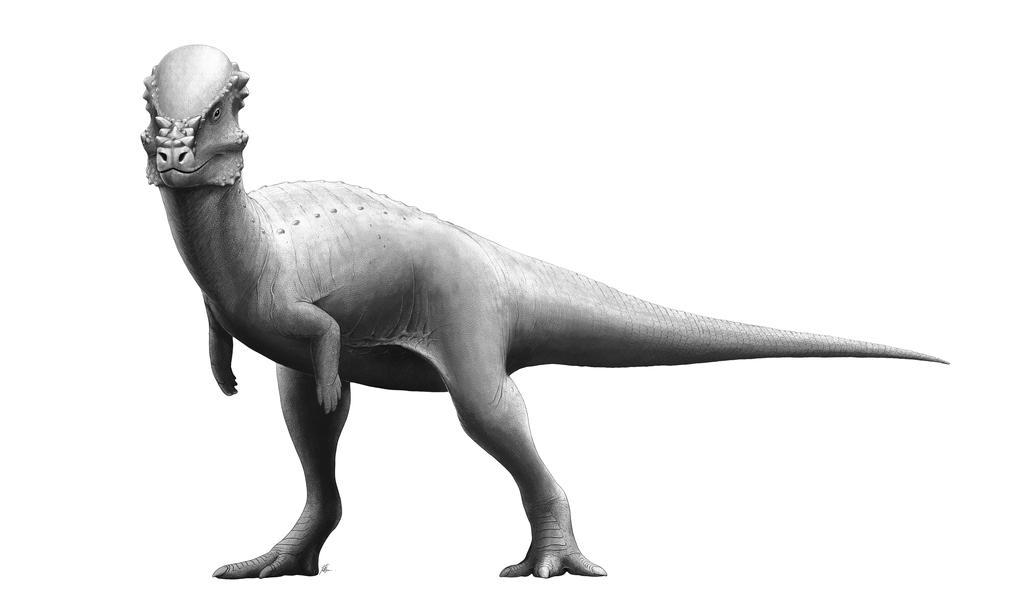 Pachycephalosaurus by FredtheDinosaurman