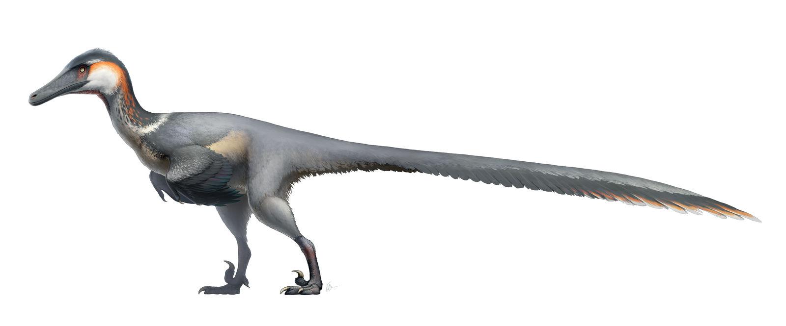 Austroraptor cabazai for Wikipedia