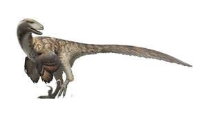 Deinonychus antirrhopus for Wikipedia
