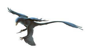 Microraptor gui for Wikipedia by FredtheDinosaurman