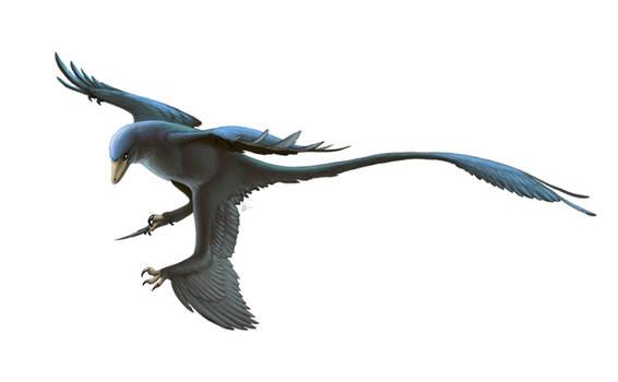 Microraptor gui for Wikipedia