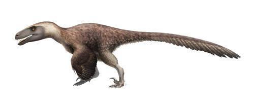 Utahraptor ostrommaysorum for Wikipedia by FredtheDinosaurman