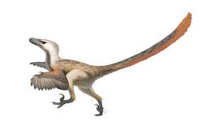 Velociraptor mongoliensis for Wikipedia