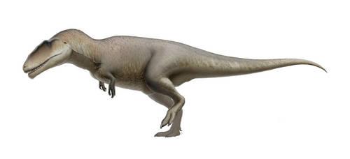Carcharodontosaurus by FredtheDinosaurman