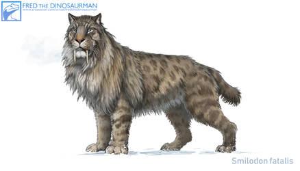Smilodon fatalis #4
