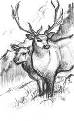 Two Elk by suburbanbeatnik