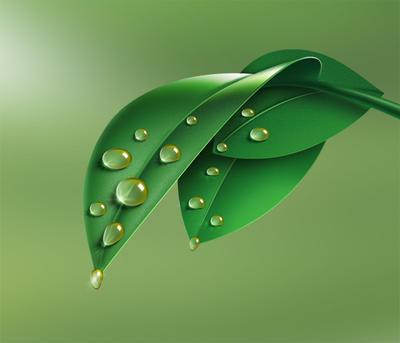 Leaf Drops by mustafacamurcu