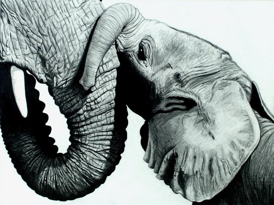 Bonding Elephants