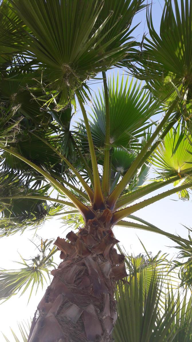 Under palm tree by viksiboom