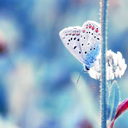 Mrs butterfly by 0paline