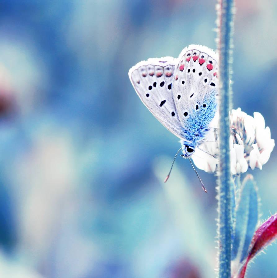 Mrs butterfly