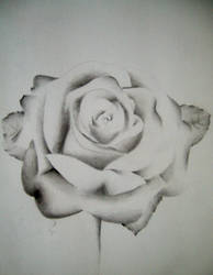 Rose by imold