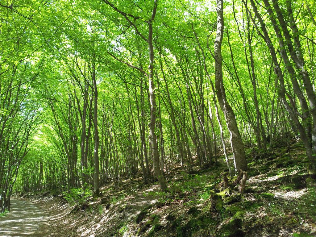 Hidden Between The Trees By Blackbutterfly006 On Deviantart