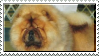 Chow stamp by doggieearlover