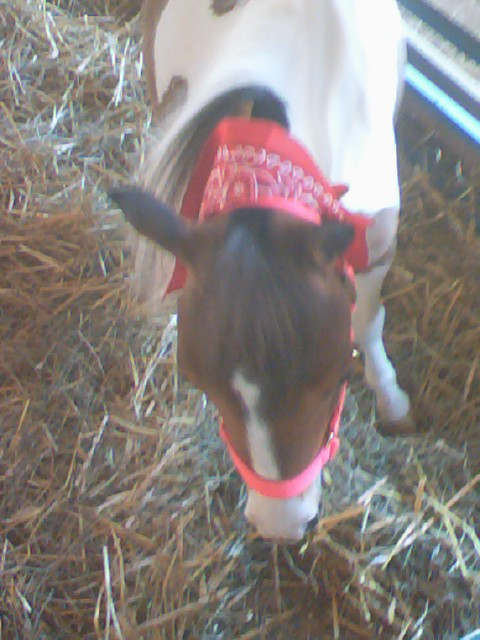 Howard co fair mini horse by ockgal on deviantart for Howard county craft fair