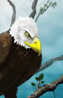 Bald Eagle by florajessica