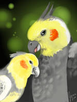 Cockatiel by florajessica