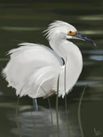 Egret by florajessica