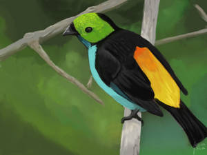 Daily Deviation: D24 - Paradise Tanager