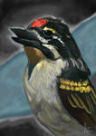Daily Deviation: D35 - Red-Fronted Tinkerbird