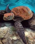 Sea Turtle by florajessica
