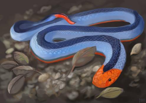 Blue Corel Snake