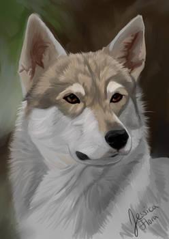 Tamaskan Wolfdog Repaint